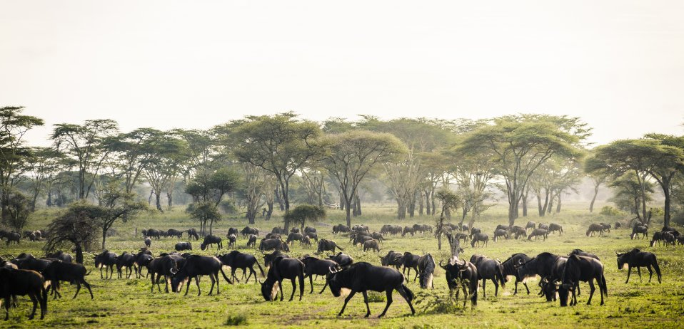 The green season, characterised by long rainfall is a beautiful time of year to visit Kenya or Tanzania