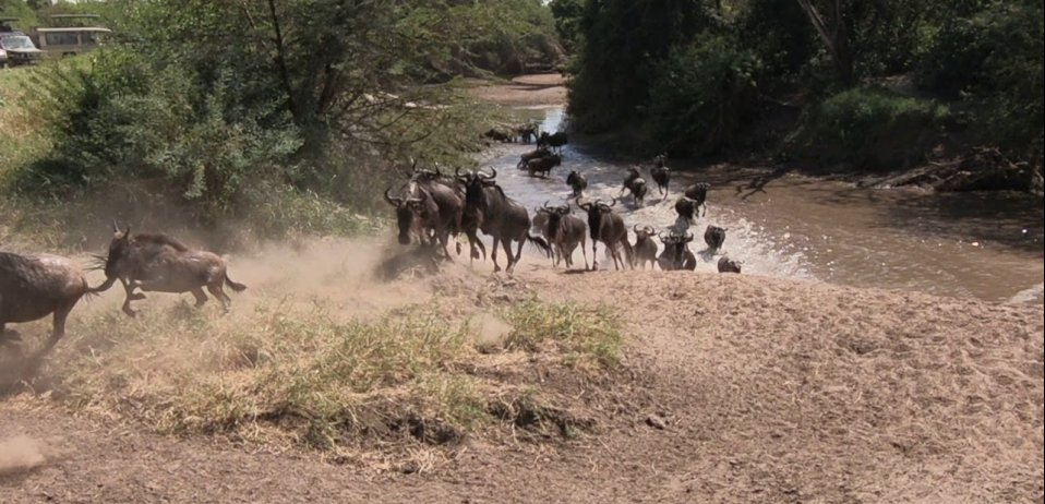 Grumeti river crossing serengeti wildebeest migration safari
