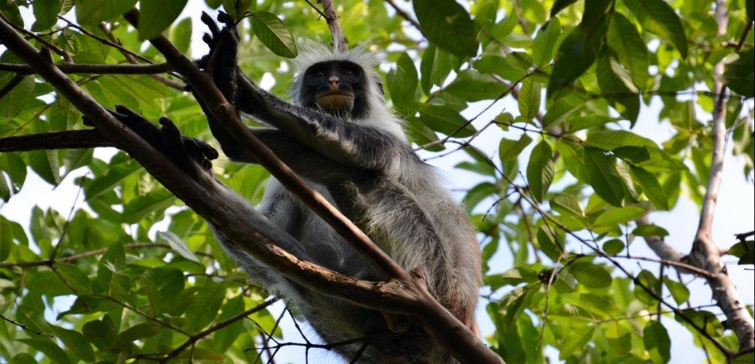 primates zanzibar holiday