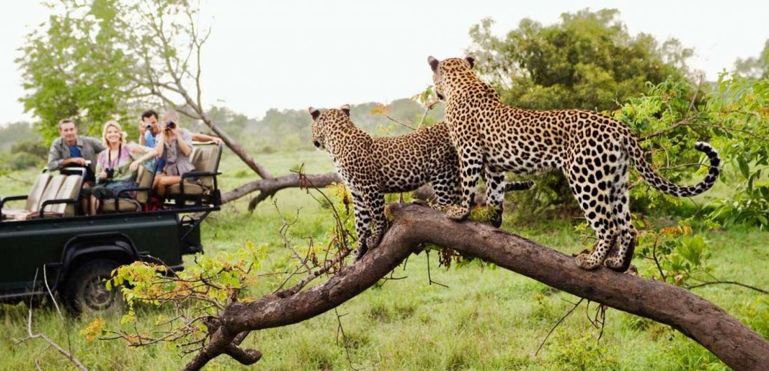 kruger national park safari game drive leopard sighting