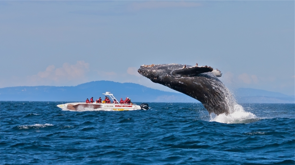 Whale watching season starts in June.