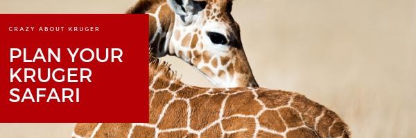 kruger national park big five safari
