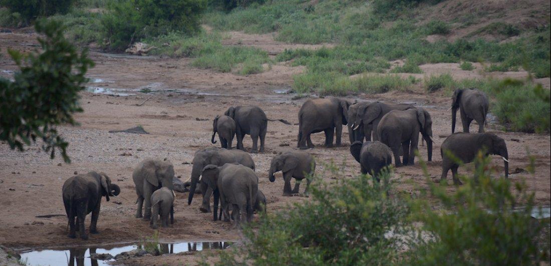 northern kruger national park elephants