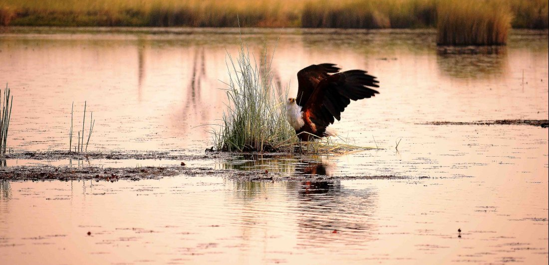 camp xakanaxa okavango delta botswana safari birding