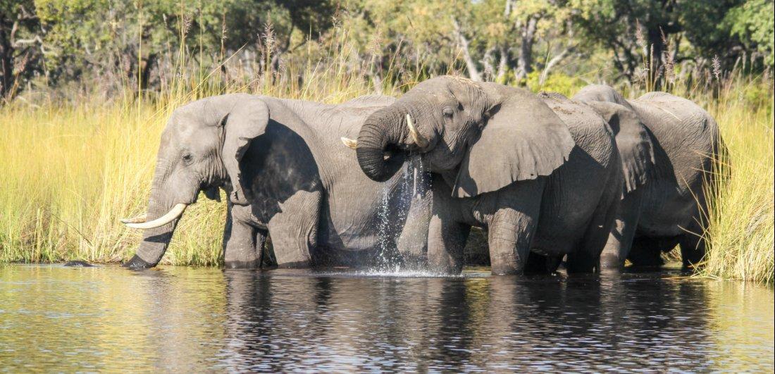 okavango delta botswana safari wildlife elephant