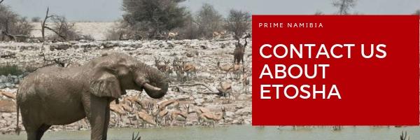 etosha-national-park-in-namibia