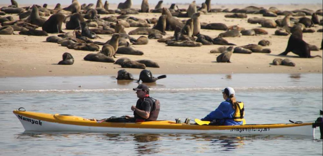 kayaking along the skeleton coast seals things to do in namibia