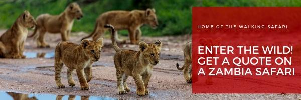safari package in zambia