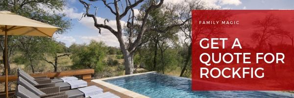 Rockfig safari lodge timbavati accommodation