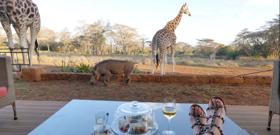 giraffe manor accommodation in nairobi kenya safari dining