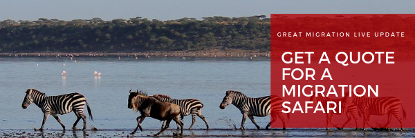 February Latest Live Migration Updates | Discover Africa Safaris