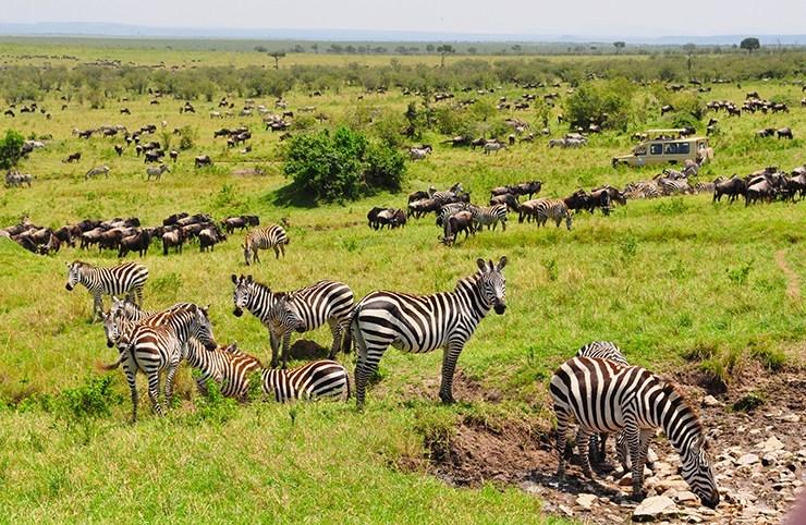 masai-mara-migration-safari