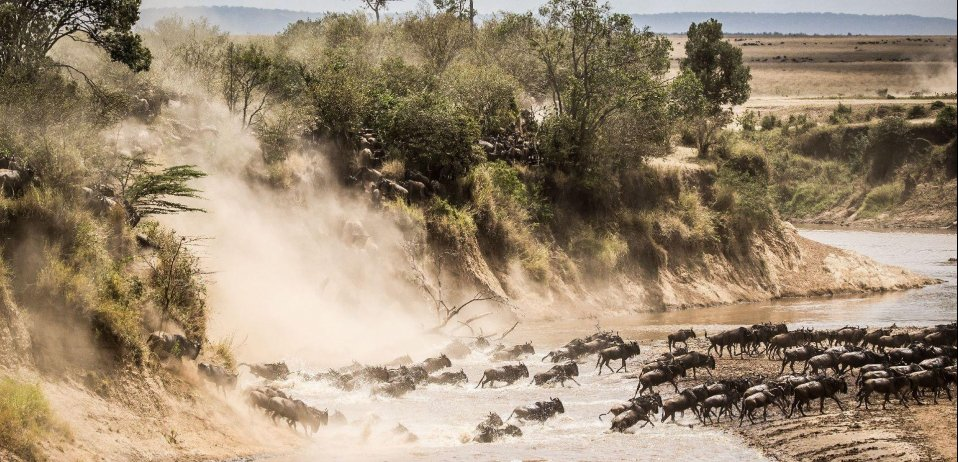 wildebeest migration river crossings masai mara