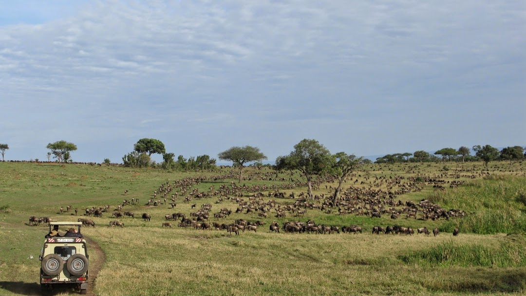 serengeti-migration-safari