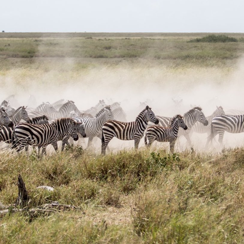 migration-luxury-safari