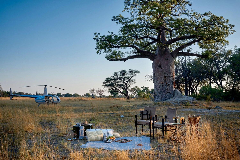 Picnic amongst Baobab Trees