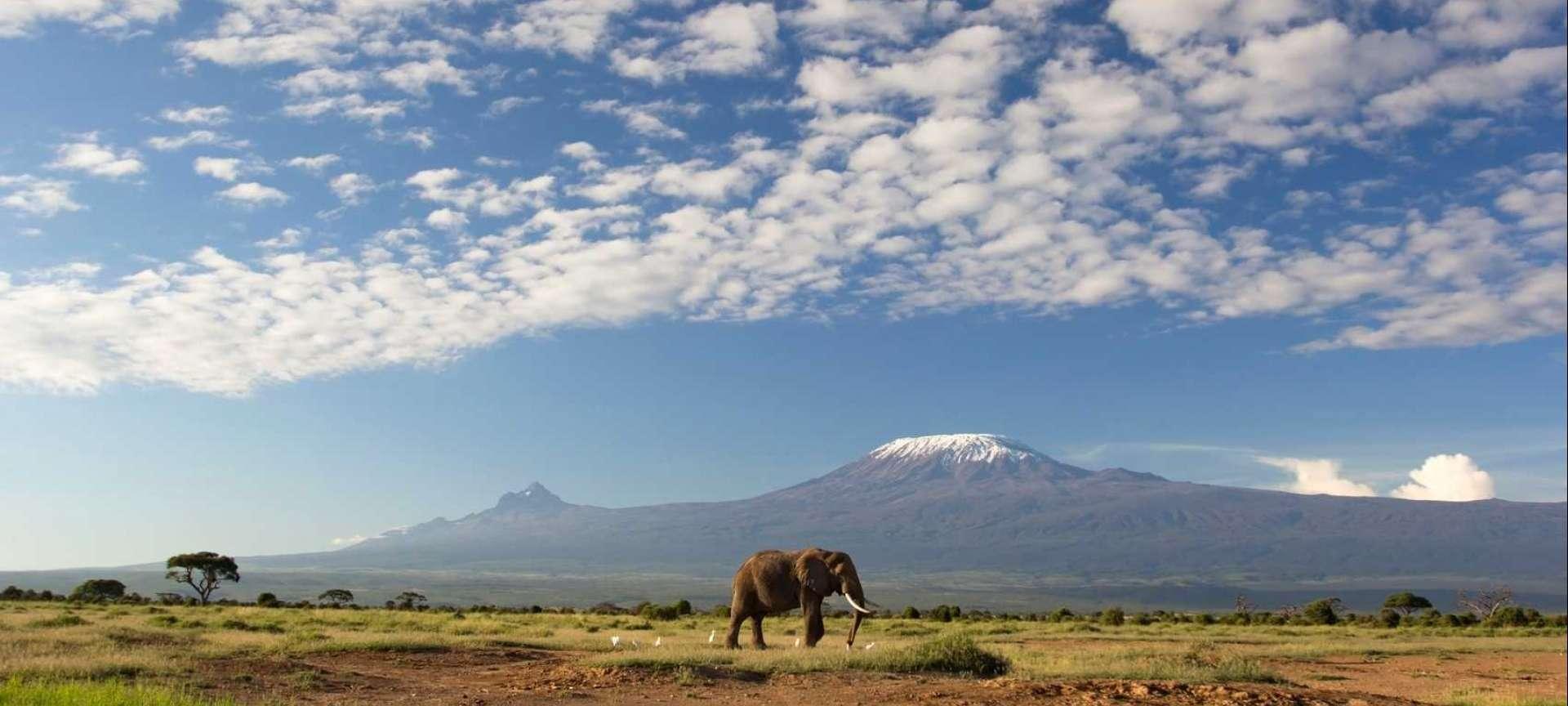 Climbing Mount Kilimanjaro in Tanzania - Africa Wildlife Safaris