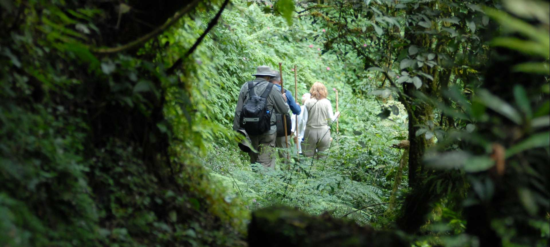 Mountain gorilla trekking in Africa - Africa Wildlife Safaris