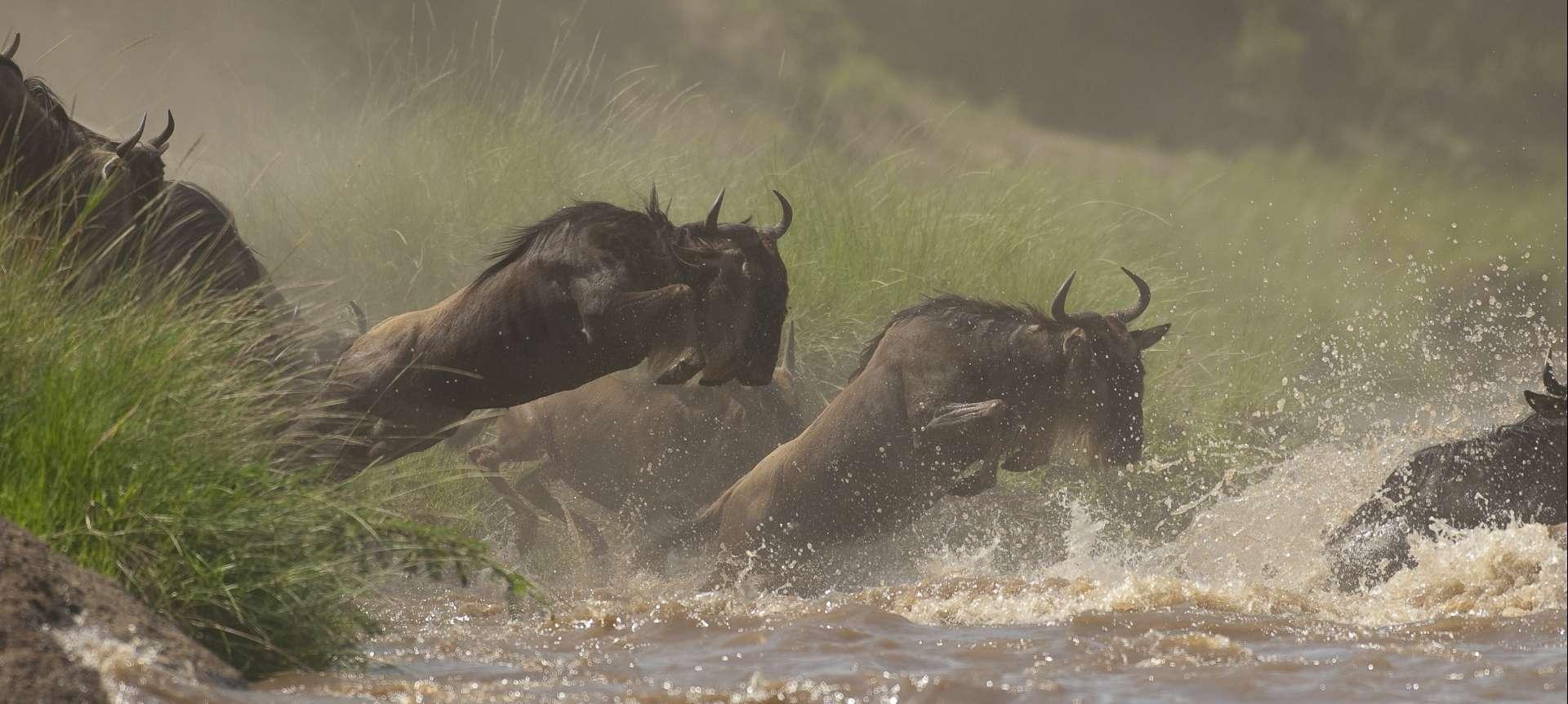 Migration safaris in Africa - Africa Wildlife Safaris