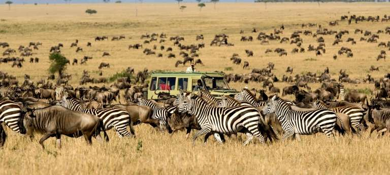 Migration safaris in Africa