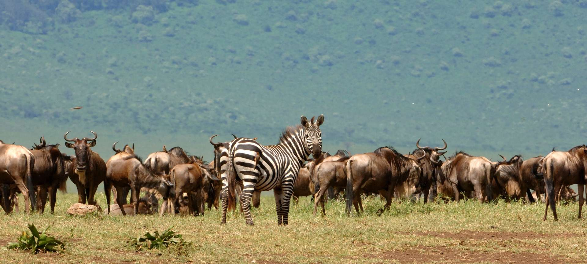 Migration safaris in Africa - Africa Wildlife Safaris