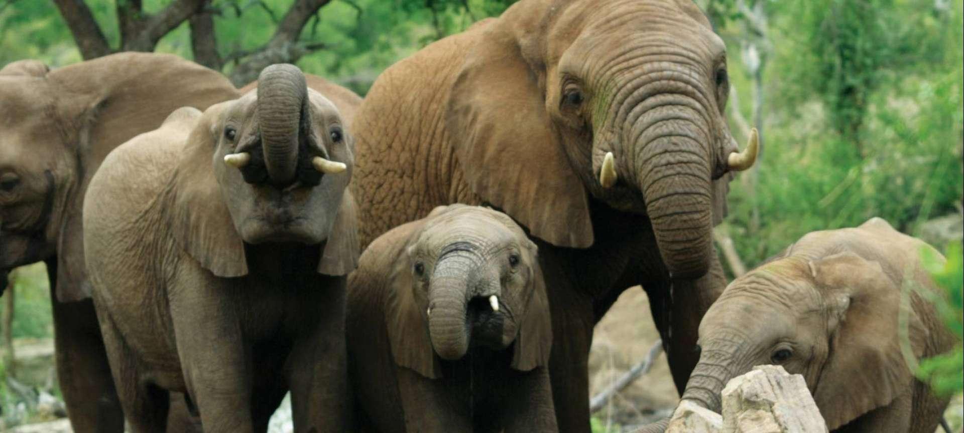 Malaria-free safaris in Africa - Africa Wildlife Safaris