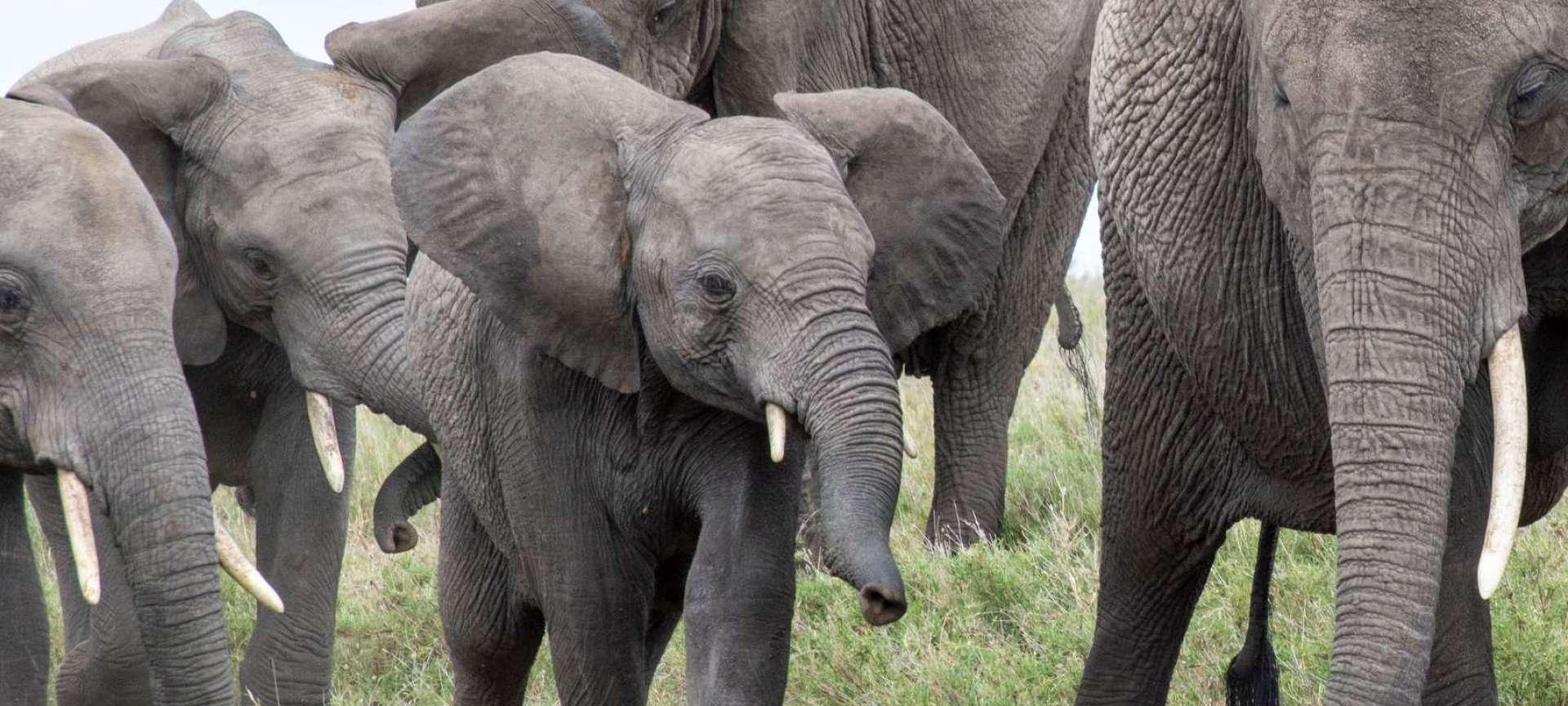 Big Five safaris in Africa - Africa Wildlife Safaris