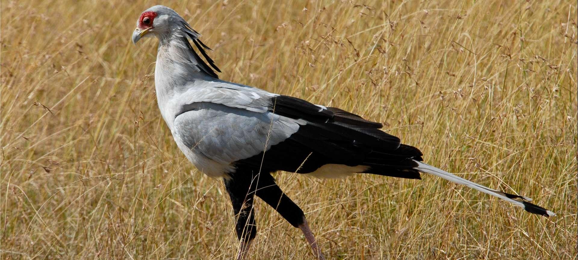 Birding Safaris in Africa - Africa Wildlife Safaris