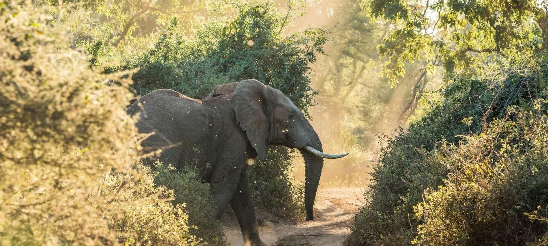 Luxury Safari Tanzania - Africa Wildlife Safaris