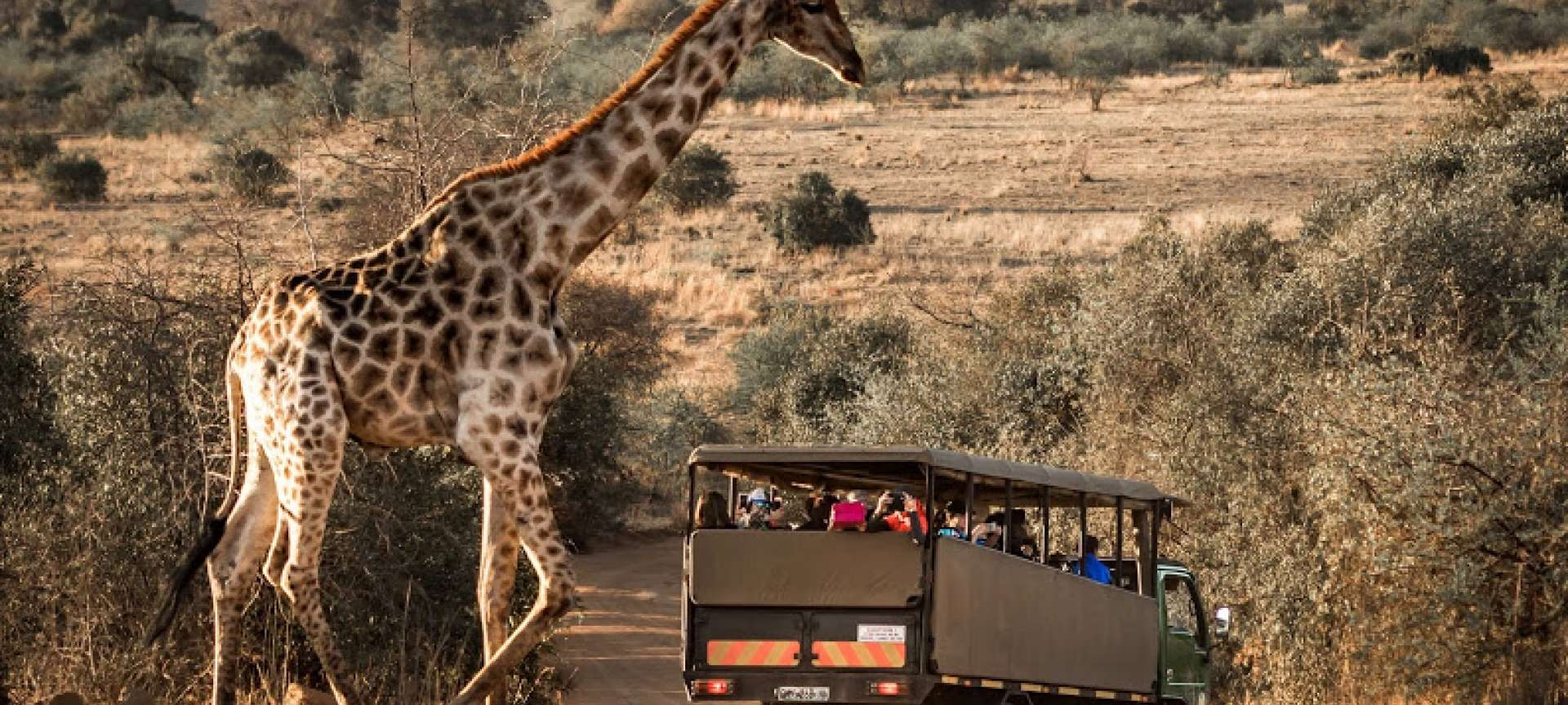 Malaria-free safari in South Africa - Africa Wildlife Safaris