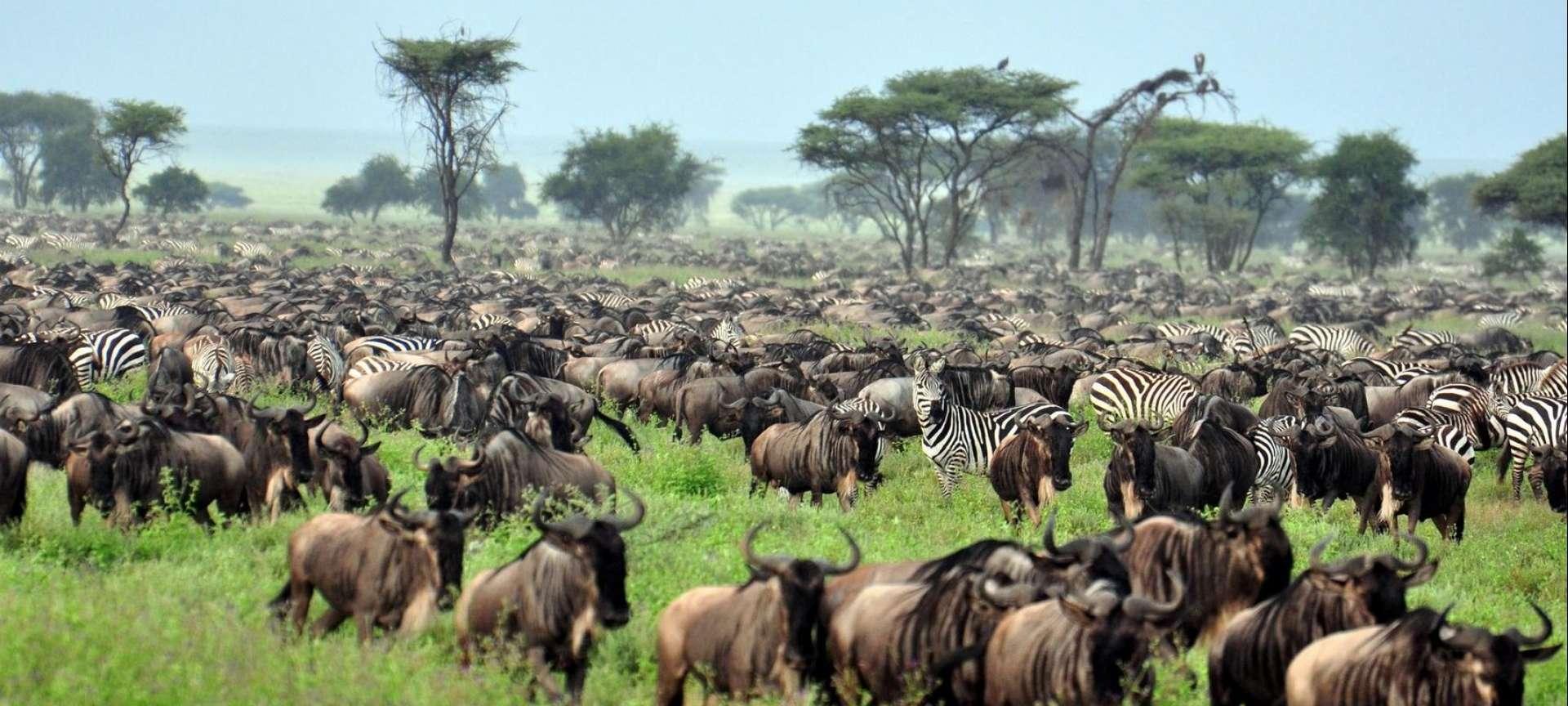 Migration Safari in Tanzania - Africa Wildlife Safaris