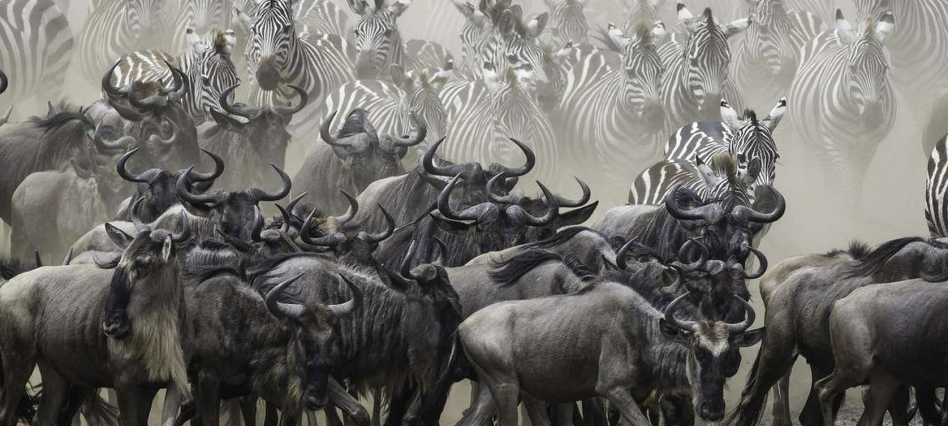 Luxury Safaris in Kenya - Africa Wildlife Safaris