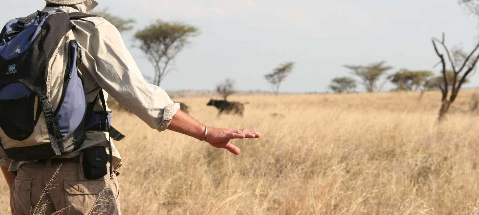 Walking safaris in Tanzania - Africa Wildlife Safaris