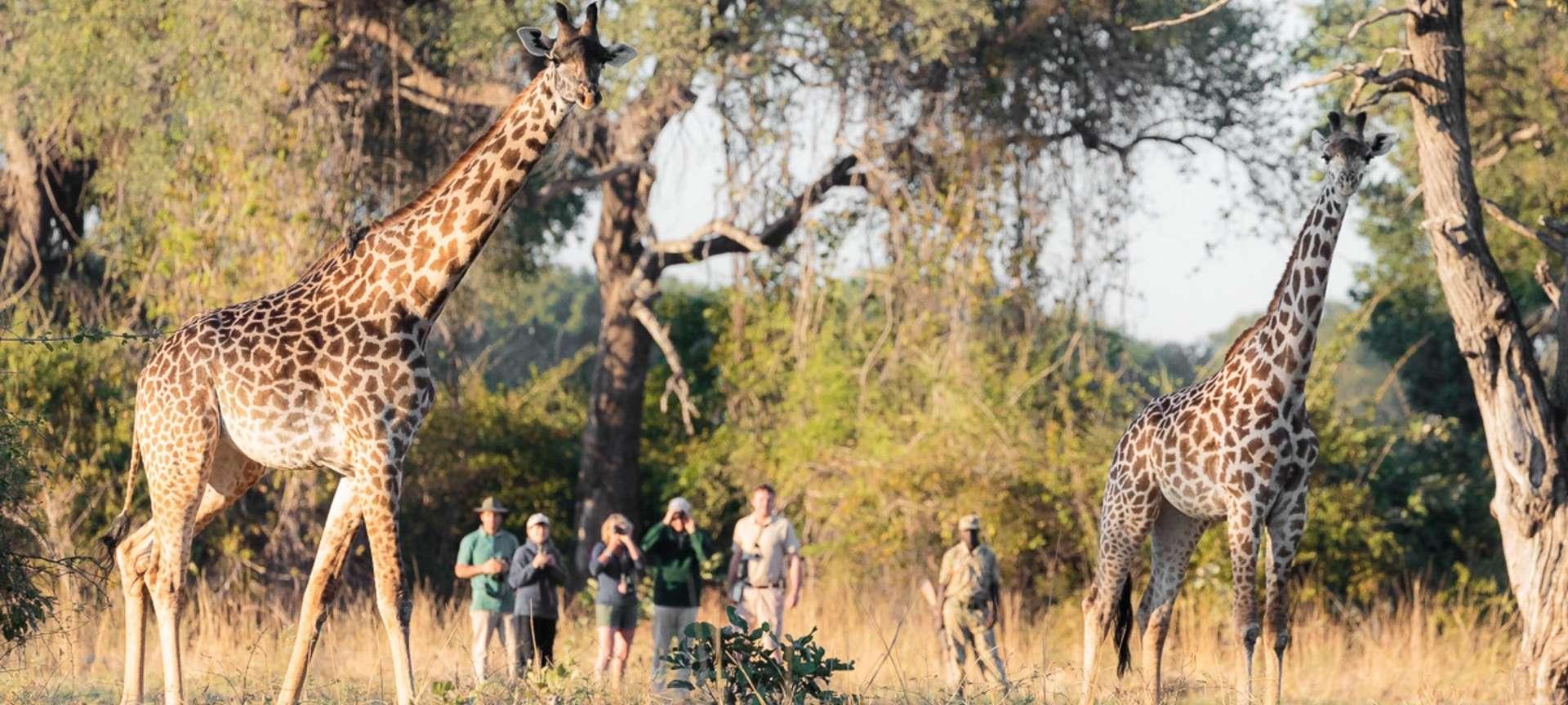 Walking safaris in South Africa - Africa Wildlife Safaris