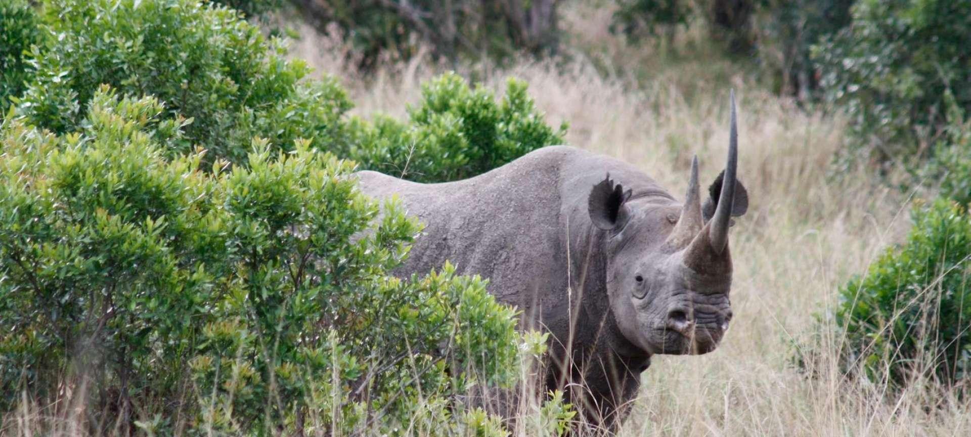 Rhino safari in Kenya - Africa Wildlife Safaris