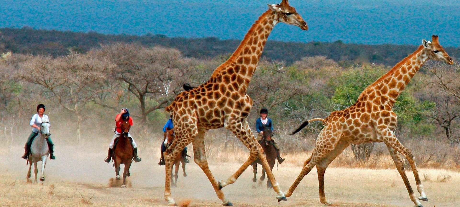 Horseback safaris in Africa - Africa Wildlife Safaris