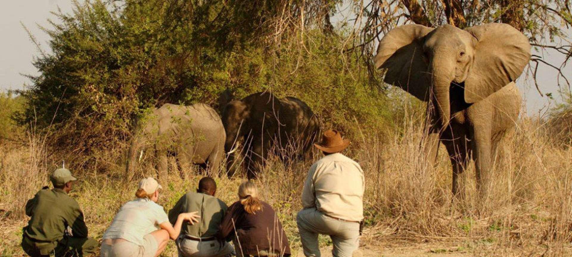 Walking safaris in Kenya - Africa Wildlife Safaris