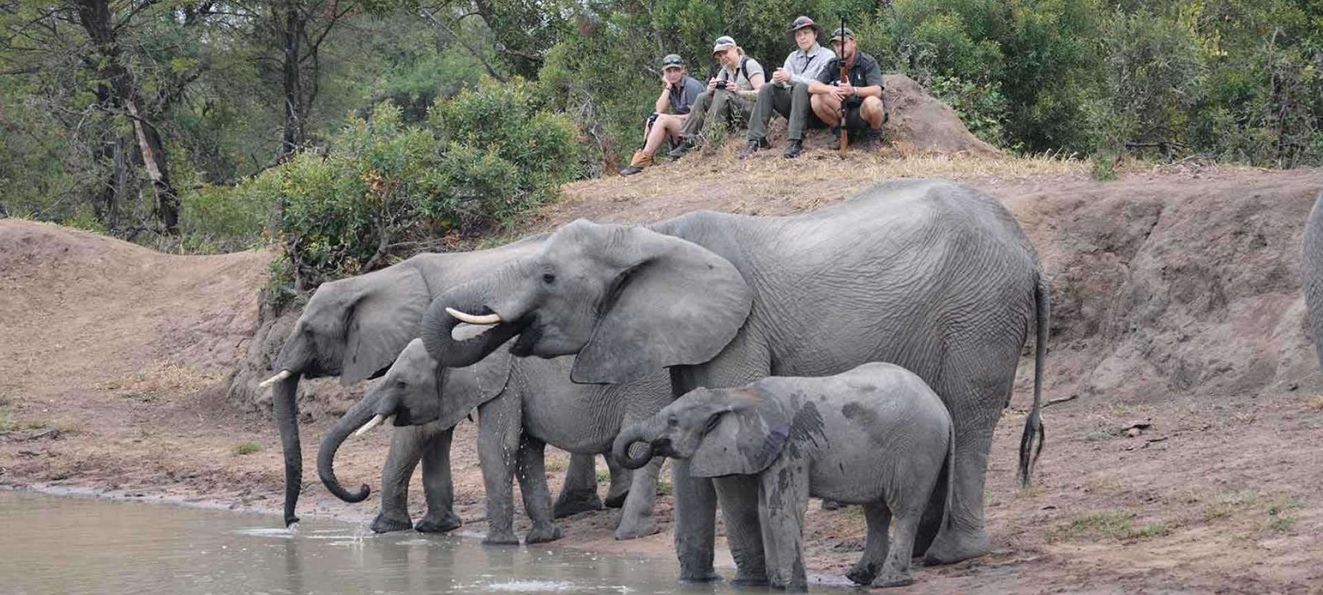 Walking safaris in Botswana - Africa Wildlife Safaris