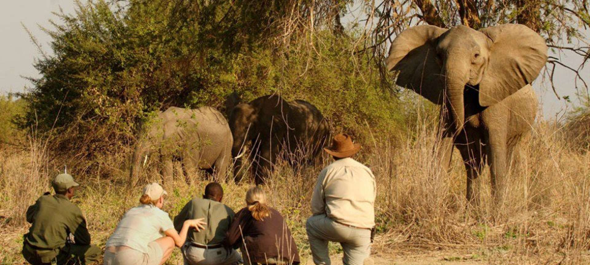 Luxury safari in the Kruger National Park - Africa Wildlife Safaris