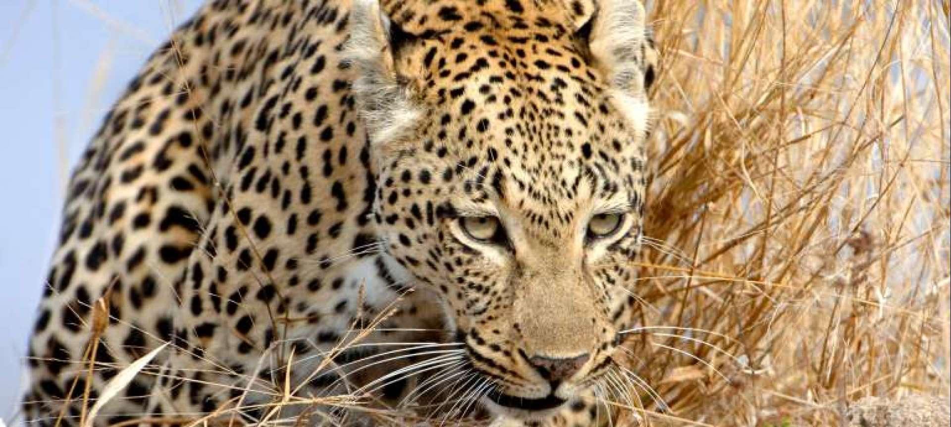 Experience a mobile camping safari in Botswana - Africa Wildlife Safaris