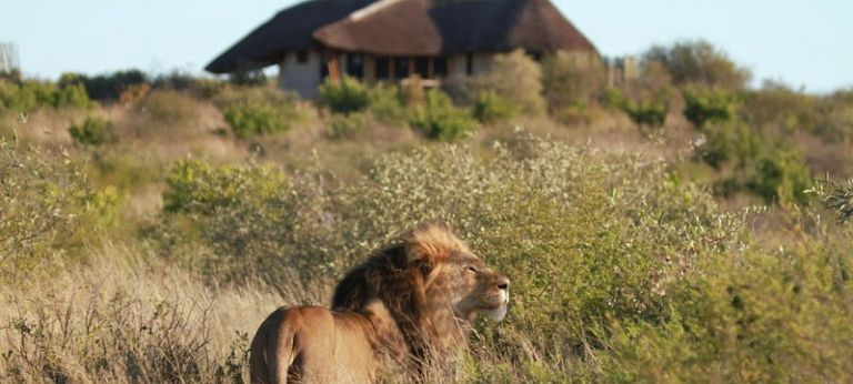 | Botswana green season safari