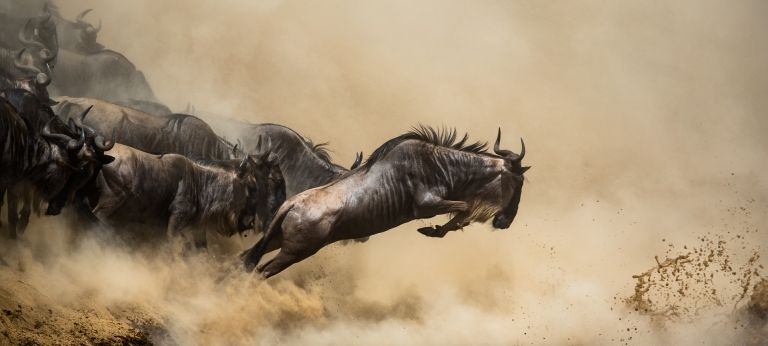 Wildebeest Migration River Crossings with Lemala Kuria Hills (4 days)
