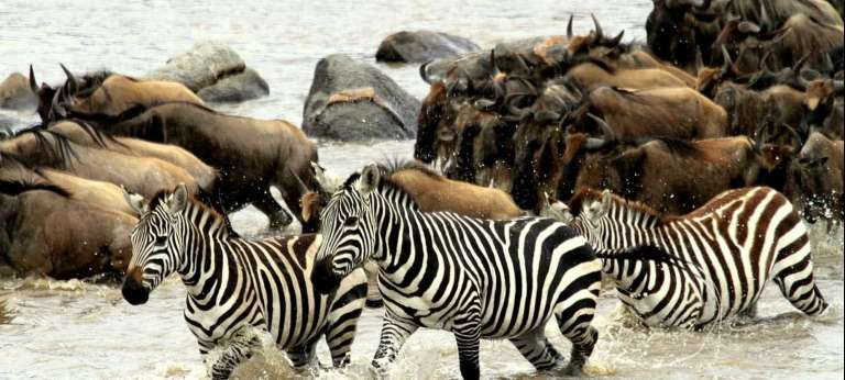 Migration River Crossings Safari with Governors' Camps (4 days)