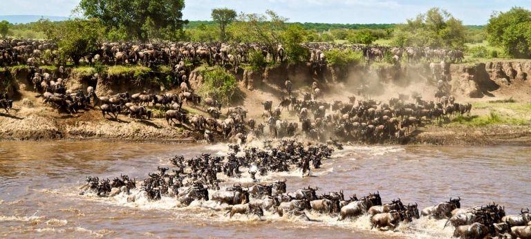 | Tanzania wildebeest migration safari