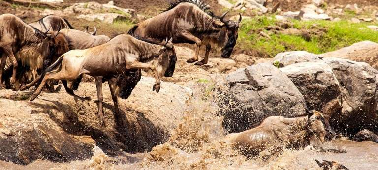 Epic Grumeti River Crossing Migration Safari (10 days)