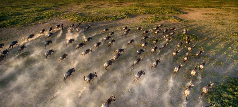 Tanzania migration safari with HerdTracker - Africa Wildlife Safaris
