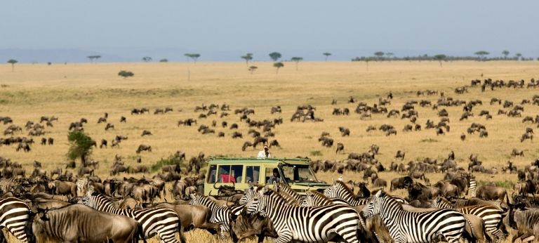 Asilia Africa | Spectacular July to September Wildebeest River Crossings  (10 days)