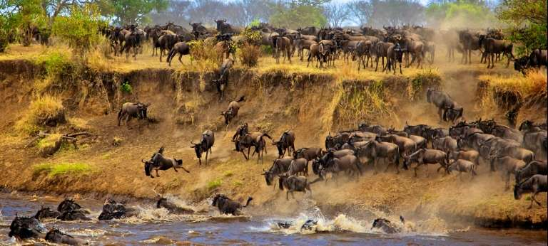 Wildebeest Migration | The Migration River Crossings July to September
