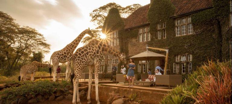 | Masai Mara Wildlife Discovery Safari (10 days)