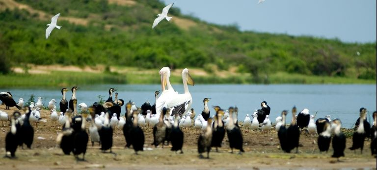 Birding Tour through Uganda (11 days) - Africa Wildlife Safaris